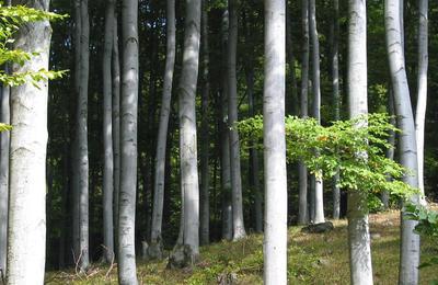 forest-1380650_gabor_szakacs_freeimages.jpg